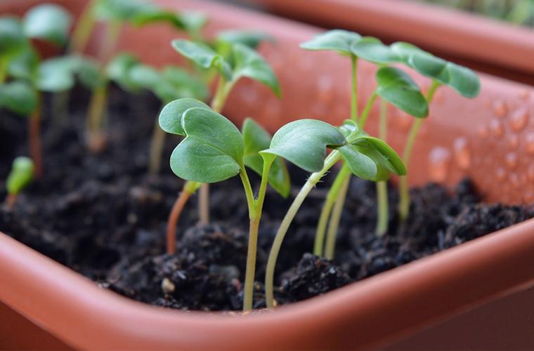 8 Amazing Uses Of Epsom Salt For Your Garden The Salt Box